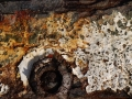 Rustbucket-2-Photograph-29-x-39-cm